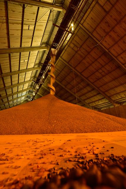 Stockage de fèves de cacao à Grand-Couronne