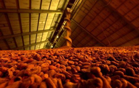 Une belle campagne pour le cacao
